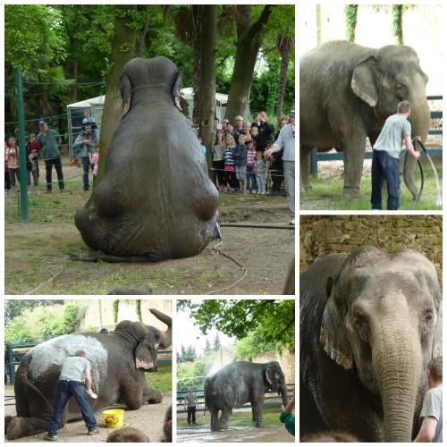 Gruss_Douche_Elephant_Piolenc_Expressionsdenfants.jpg
