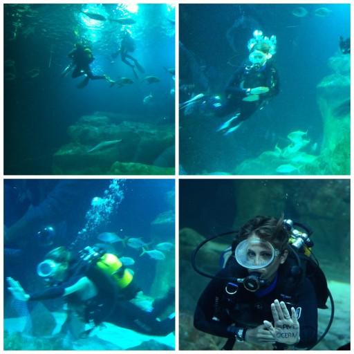 Aquariumdeparis_Maud Fontenoy_Expressionsdenfantt