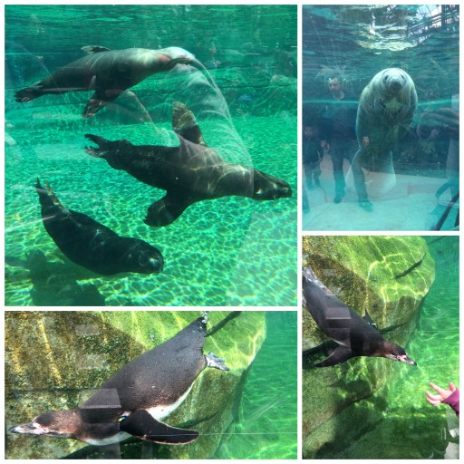 Tribu Fisher Price Animaux aquatiques_Expressionsdenfants