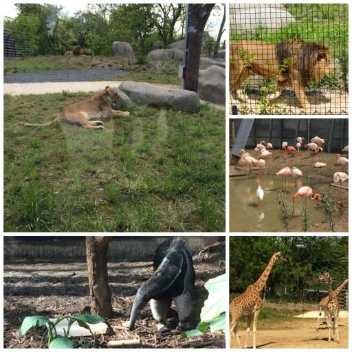 Tribu Fisher Price Animaux_Zoo de Paris_Expressionsdenfants