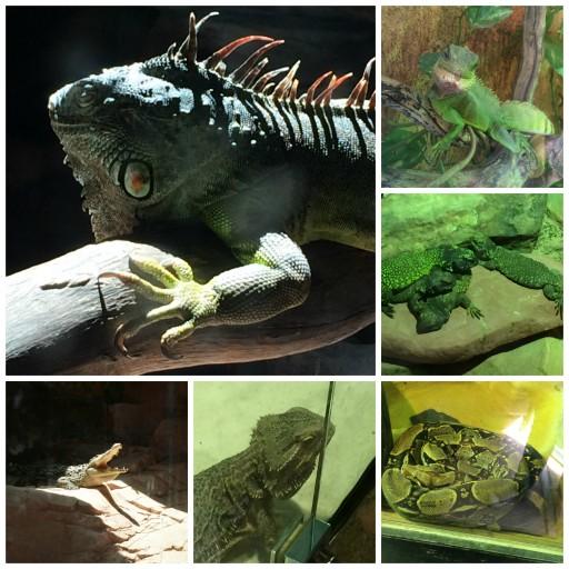 L'arche aux reptiles_Planète Sauvage_Expressionsdenfants