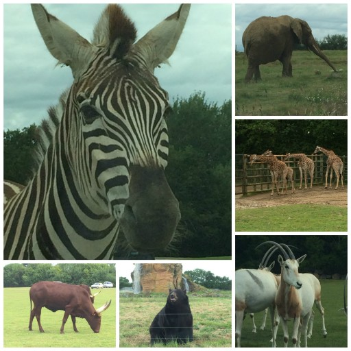 Safari_Animaux journée_Planète Sauvage_Expressionsdenfants
