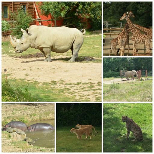 Safari_Animaux_Planète Sauvage_Expressionsdenfants