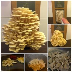 Prêt à Pousser, des champignons chez moi!