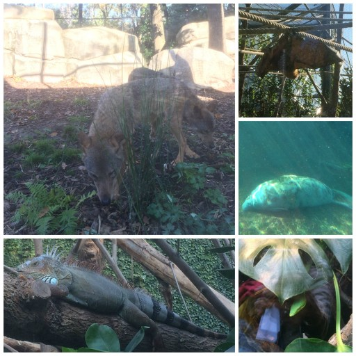 Zoo de Paris_visite_Expressionsdenfants