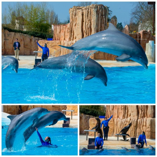 Révérence_Dauphins_Otaries_attraction_Parc Astérix_Expressionsdenfants