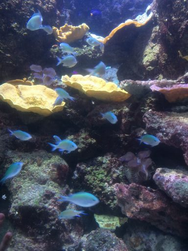 Aquarium de Paris_ Médusarium_Printemps_Expressionsdenfants