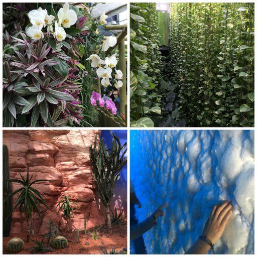 A l'épreuve des extrêmes_Terra Botanica_Expressionsdenfants