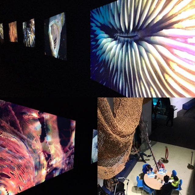 Sous le charme de lexposition corail  aquariumdeparis