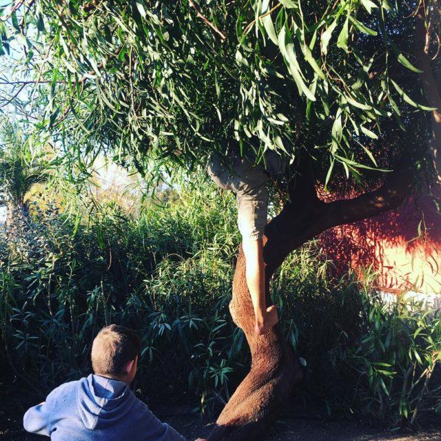 1 arbre  2 garons  1 heure de tranquillithellip