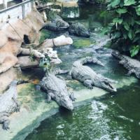 L'été à La Ferme aux Crocodiles [+Concours]