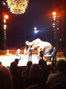 Venez au cirque national Alexis Gruss