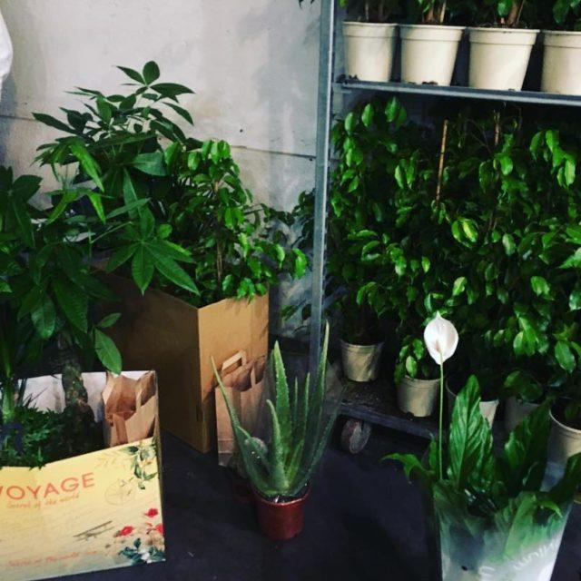Cest LE weekend pour remplir de plantes son appartement !hellip